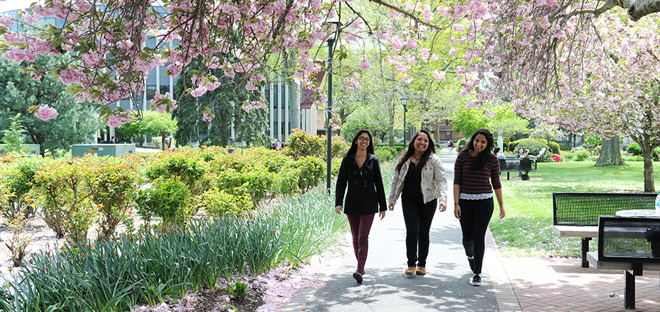 Adelphi students walk among the cherry blossoms