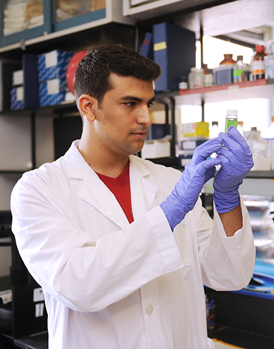 Adelphi joint degree student working in lab coat