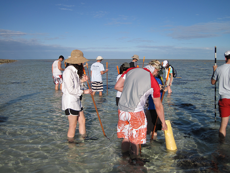 Australia Adelphi Study Abroad - Students finding samples in the shallows
