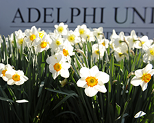 Adelphi Facts
