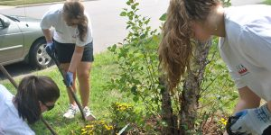 freshman-community-action-program