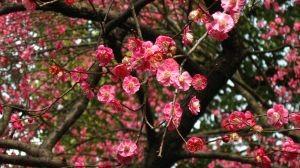 1153373_blossom_2