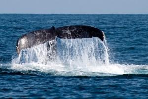 1387804_whale_fin
