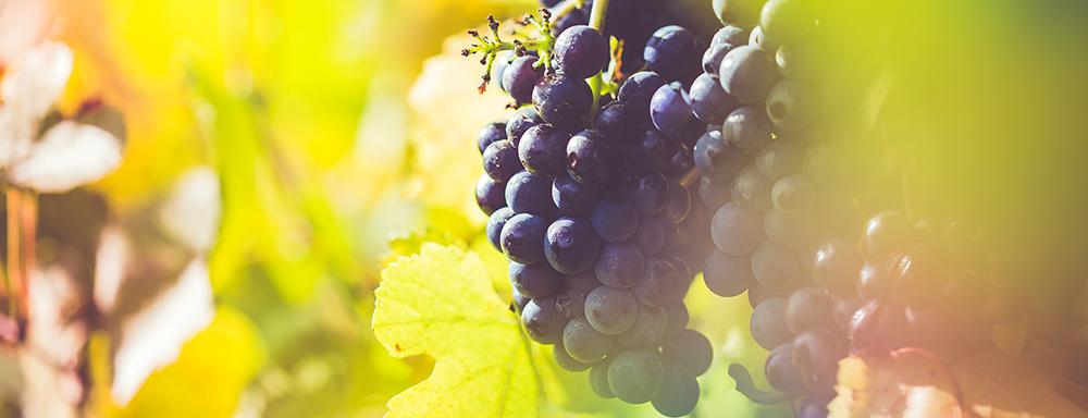 Vineyards and Breweries