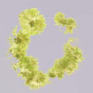 Microscopic view of mutant moss.