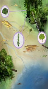 Artwork by Sae Bom Ra, Adelphi scientific illustration major