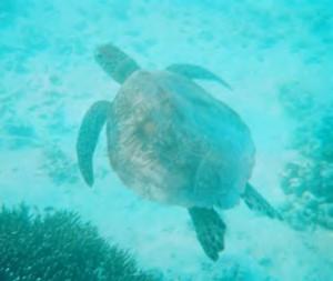 Australia Study Abroad Turtle
