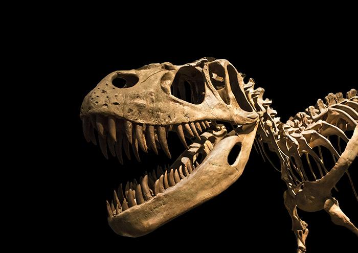 dinosaurBIG