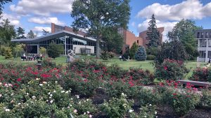 Adelphi University's rose garden with a view of the renovated UC.